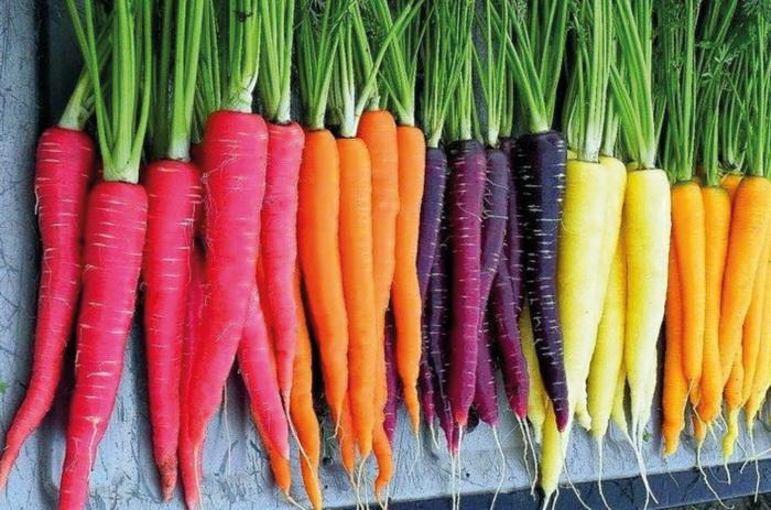 Яркие сорта моркови