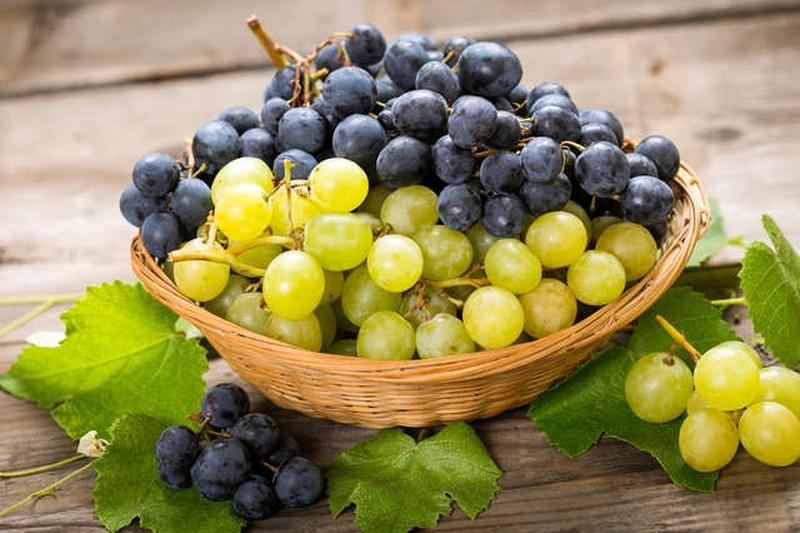Польза винограда. Может ли виноград быть вреден для человека?